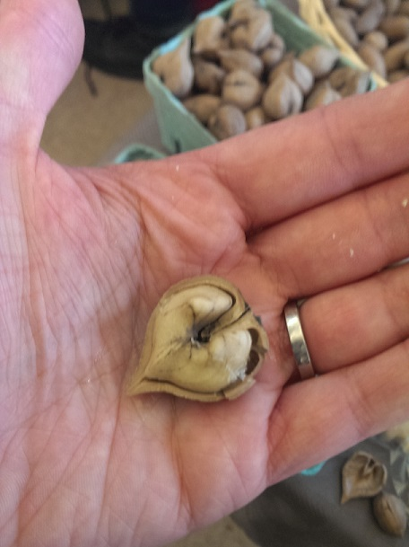 heart nut from farmers market